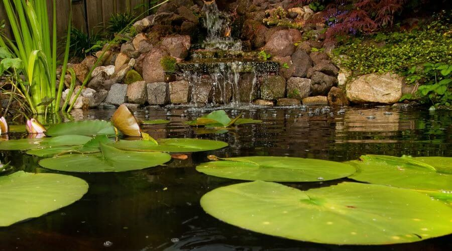 How to Lower pH in Koi Pond