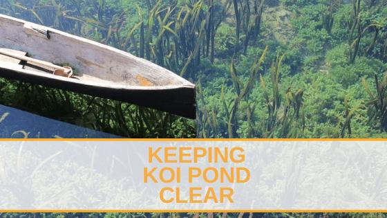 keeping koi pond clear