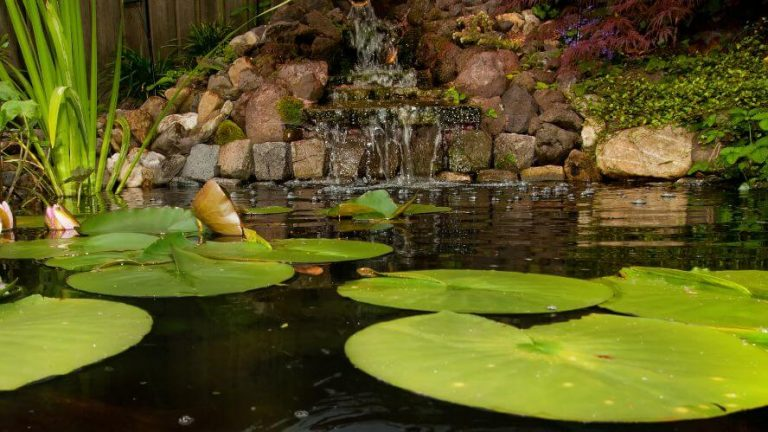 How to Lower the pH in Koi Pond
